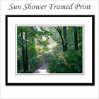 Spring Sun Shower Framed Print on the funEZ Bazaar